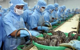 Mỹ giảm thuế chống bán phá giá tôm: Doanh nghiệp Việt vẫn lép vế
