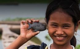 Chi tiết hơn về con cá bằng sắt Lucky Fish giúp ngăn ngừa thiếu máu