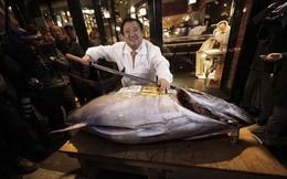 Thăm phiên đấu giá cá ngừ đầu năm ở Nhật Bản