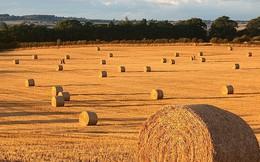 Đỉnh điểm khủng hoảng nông nghiệp ở châu Âu