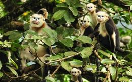 Bạn sẽ không còn thấy 11 loài vật sau ở Việt Nam