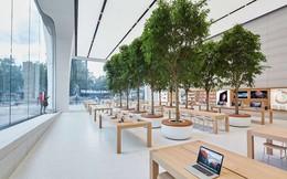 """Bên trong Apple Store được """"phù thủy thiết kế"""" Jony Ive thực hiện"""