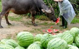 Bộ trưởng Cao Đức Phát: Không phải sản phẩm nông nghiệp nào của VN cũng như dưa hấu, hành tím