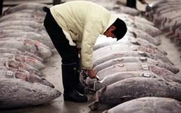 Nhật Bản muốn xây nhà máy chế biến cá ngừ ngay tại Việt Nam