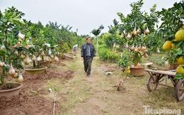 Ngắm vườn thập quả cực độc đáo của lão nông ở Thủ đô