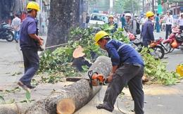 6.700 cái cây bị chặt và chuyện phát ngôn lãnh đạo