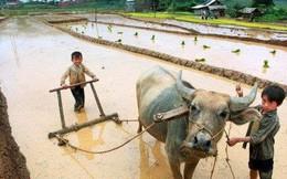 """CEO ngoại chỉ ra 4 điểm """"đáng tiếc"""" của nông nghiệp Việt Nam"""