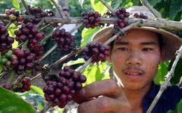 Chỉ có 10% cà phê Việt được tiêu thụ trong nước