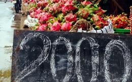 Chùm ảnh: Thanh long Tiền Giang xuống đường 2.000 đồng/kg
