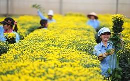Doanh nghiệp Nhật muốn xây dựng thị trường bán buôn hoa ở Việt Nam