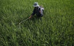 Trước những biến đổi khó lường của 'mẹ thiên nhiên', làm thế nào bảo vệ nguồn cung lương thực toàn cầu?