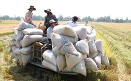 Tại sao giá gạo xuất khẩu VN thấp nhất thế giới?