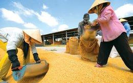 Việt Nam nằm trong chuỗi cung ứng toàn cầu của doanh nghiệp Nhật Bản