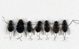 """Chuyện """"nhỏ như con ruồi"""" và đạo đức kinh doanh"""