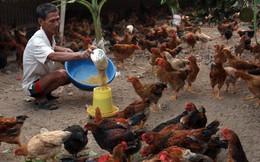 World Bank tài trợ 45 triệu USD cho ngành chăn nuôi và an toàn thực phẩm tại Việt Nam