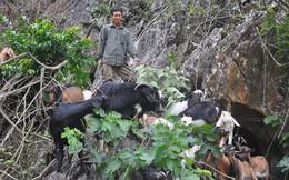 Những nông dân làm giàu nhờ... lên núi