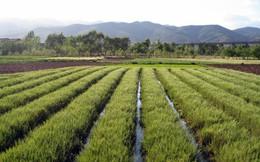Trợ cấp nông nghiệp nhìn từ Trung Quốc: Chính phủ càng giúp càng ... méo