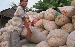 Gạo Việt dự báo thắng thầu tại Philippines vì giá rẻ?