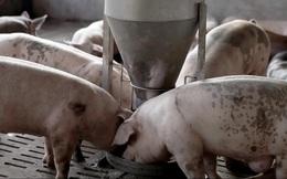 Sẽ chỉ còn những 'ông lớn' như Masan, Cargill, CP trên thị trường thức ăn chăn nuôi?