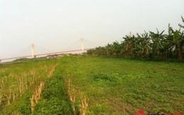 Chuyện lạ dịch vụ cho thuê đất trồng rau sạch ở Hà Nội