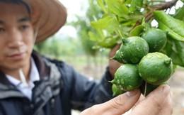 Từ 1/8, làm nông được vay đến 3 tỷ đồng, không cần tài sản bảo đảm