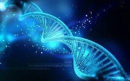 Loài người có thể sử dụng DNA của chính mình thay cho ổ cứng