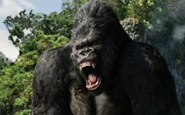 Phim King Kong 2 có thể sẽ được quay tại Việt Nam?