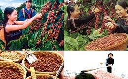 Một năm buồn của cà phê Việt Nam
