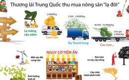 Lạ đời cách thương lái Trung Quốc thu mua nông sản