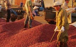 """Lotte """"mê"""" nông nghiệp Việt"""