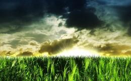 Rủi ro khi đầu tư vào nông nghiệp và chiến lược phòng hộ