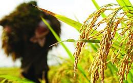 Việt Nam tự hào xuất khẩu nông sản hàng đầu thế giới, giá trị tạo ra thực chất được bao nhiêu?