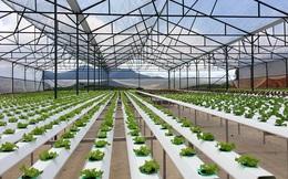 Nông nghiệp công nghệ cao vẫn chỉ là cuộc chơi của các ông lớn?