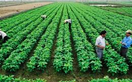 Ký kết 4 Hiệp định tín dụng trị giá 507 triệu USD giữa Việt Nam và Ngân hàng Thế giới