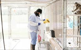 Vắc xin biến nuôi khỉ thành ngành kinh doanh lớn tại Mỹ như thế nào?