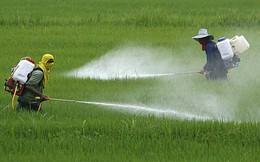 [NGHỀ CỦA TÔI] Bán thuốc trừ sâu: Tôi không thể vì vài đồng lợi nhuận mà 'đầu độc' nông dân