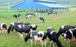 """""""Mở toang"""" chính sách hút đầu tư nước ngoài vào nông nghiệp"""