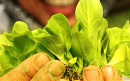 Thực phẩm hữu cơ: Cơ hội đổi đời cho nông nghiệp Việt