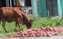 Điểm yếu của nông sản Việt Nam: Quá nhiều, quá nguy hiểm