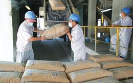 Doanh nghiệp Indonesia sắp thâu tóm 1 công ty xi măng Việt Nam