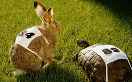 Trong cuộc đua hội nhập, Việt Nam nên là Rùa hơn Thỏ