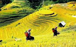 Ruộng bậc thang Việt Nam lọt vào top ảnh du lịch năm 2015