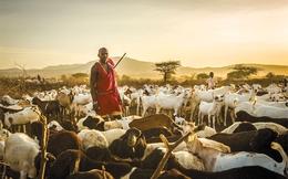 Du lịch thăm dê ngắm cừu