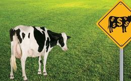 Nông nghiệp công nghệ cao: Tỷ phú làm nông
