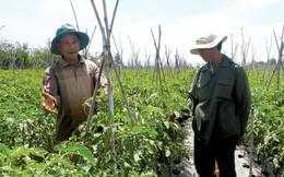 Kinh doanh rau organic: Đường đến đích còn xa