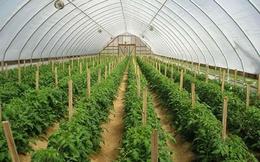 Hà Nội đầu tư gần 600 tỷ đồng vào nông nghiệp công nghệ cao