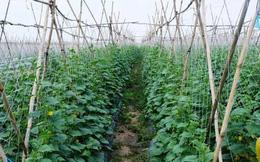 2 xu hướng phát triển nông nghiệp thời hội nhập