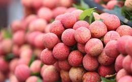 Trái vải Việt sang Pháp: 240.000 đồng/kg vẫn đắt hàng