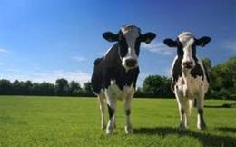 Công ty sữa lớn nhất Australia về tay Trung Quốc