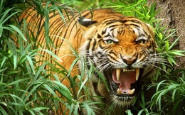Báo Anh: Việt Nam có thể vượt lên thành con hổ mới của châu Á hay không, hoàn toàn trông chờ vào thời khắc này đây